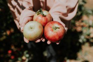 comment conserver les pommes